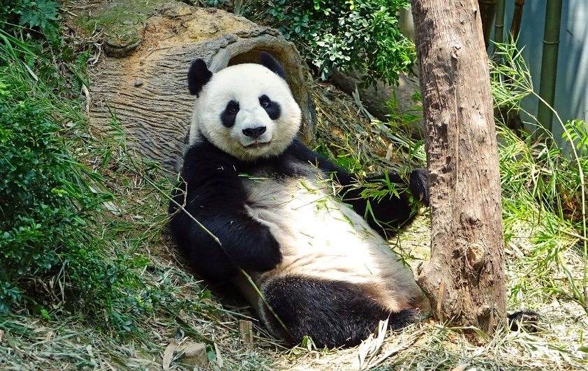 22 lipca tego roku Google przekazało oficjalnie wiadomość o wdrożeniu nowej wersji mechanizmu Panda