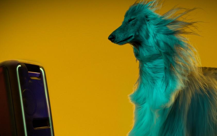 Jaką muzykę wolą psy