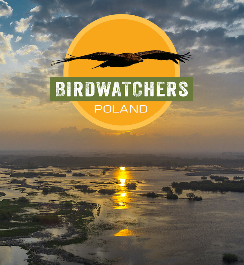 Birdwatchers: Poland