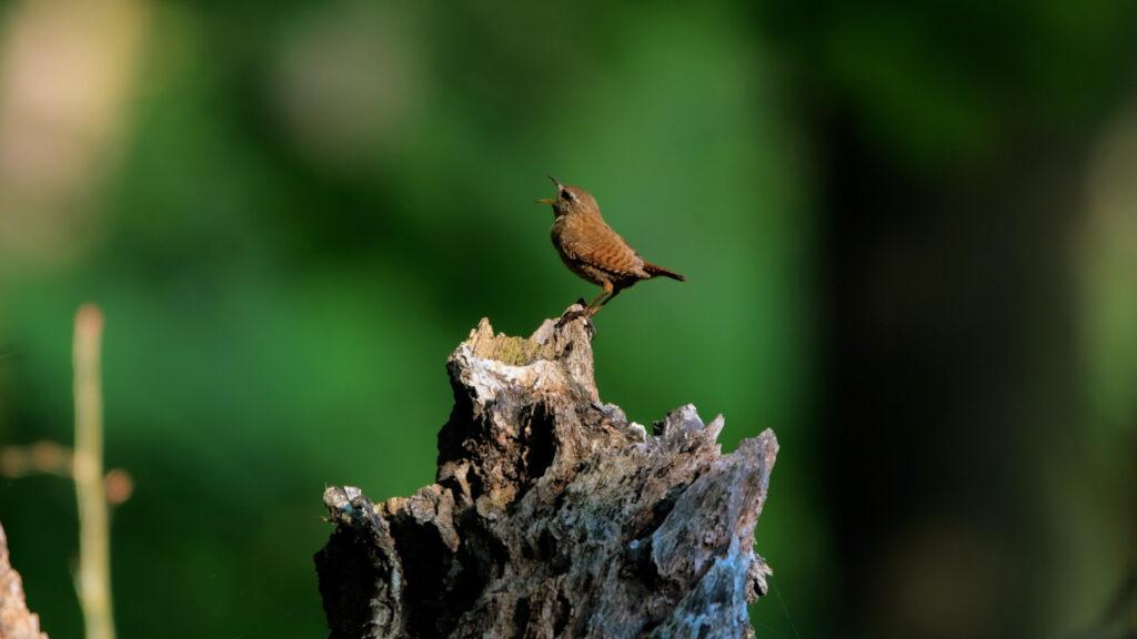 Co to jest Birdwatching